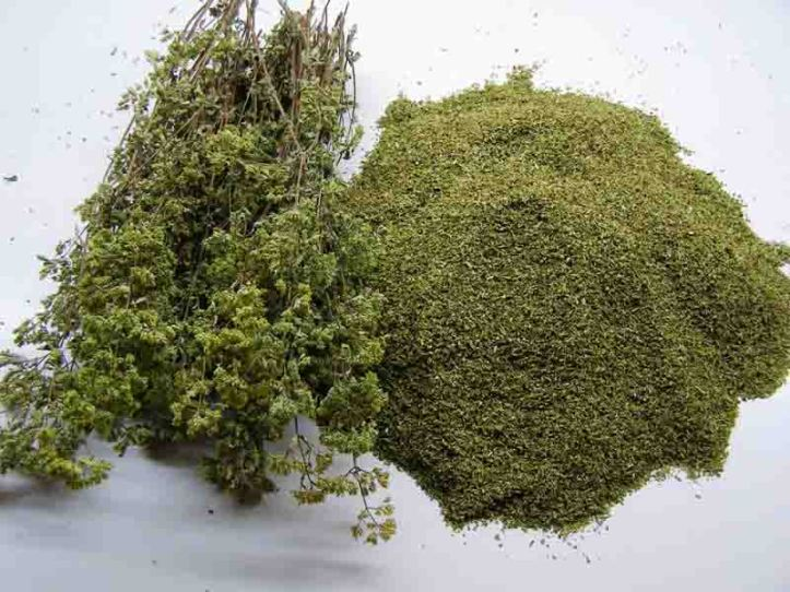 oregano 1SMALL.jpg